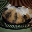 「くー」洗濯カゴで寝る