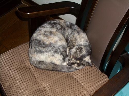 「ゴンベ」椅子で寝る